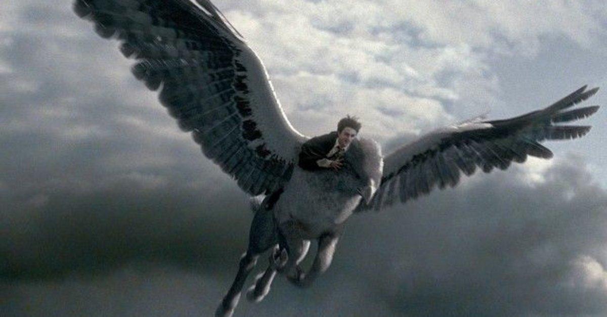 Şahgaga nedir, nerelerde yaşar? Harry Potter ile tanınan Hipogrif Şahgaga  gerçek mi? İşte merak edilen detaylar... - Son Dakika Haberler