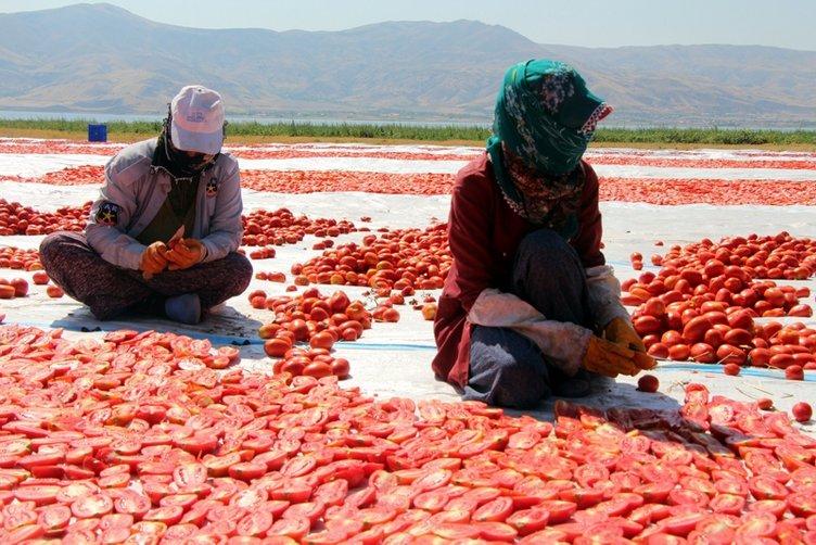 Elazığ'ın kuru domatesleri dünya sofralarında