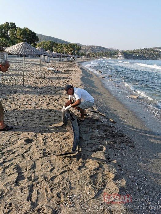 Kuşadası'nda üzücü olay! Peş peşe sahile vurdular...