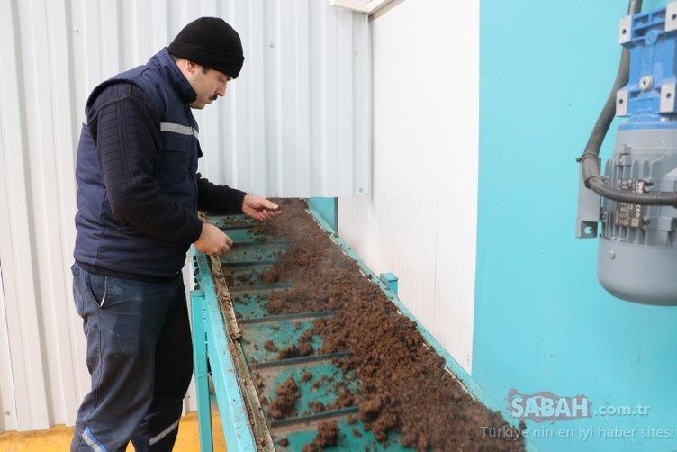 Çölde domates yetiştirilebilecek nitelikte gübre üretildi!