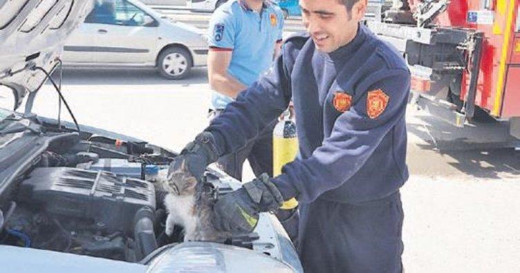 İtfaiye 249 hayvanın hayatını kurtardı