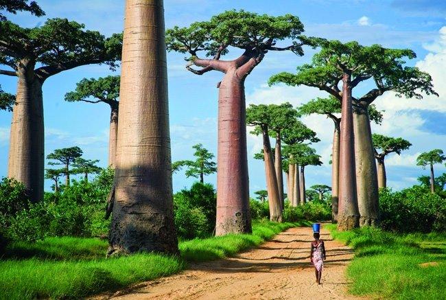 Dünyanın en garip ormanları