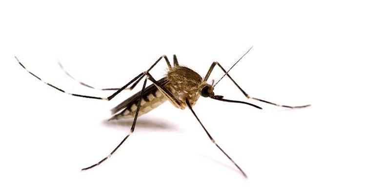 Sırbistan'da Batı Nil virüsüne 25 kurban