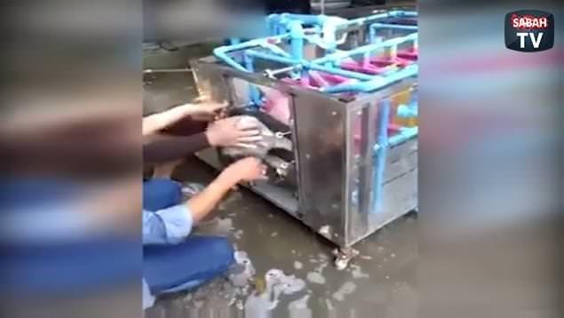 Köpek yıkama makinesi yaptılar!