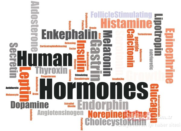 İştahınızı yöneten hormonları harekete geçirecek mucize besinler ile zayıflayın!