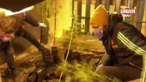 Uşak'ta polisleri bile şaşkına çeviren görüntü... Evini uyuşturucu tarlasına çevirip, güneş panelleriyle ısıtmış | Video