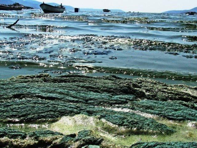 Bafa Gölü'nde korkutan manzara