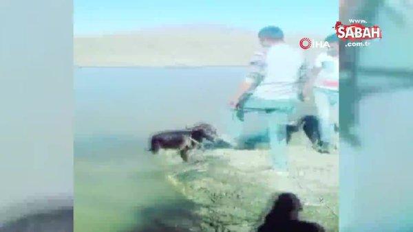 Kars'ta tepki çeken işkence! Yavru eşeği bağlayıp göle attılar   Video