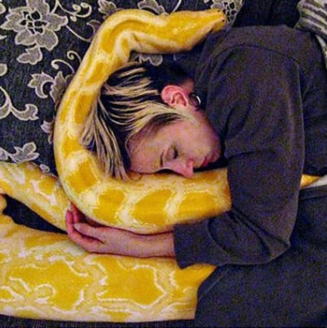 Evlerinde dev bir yılan var!
