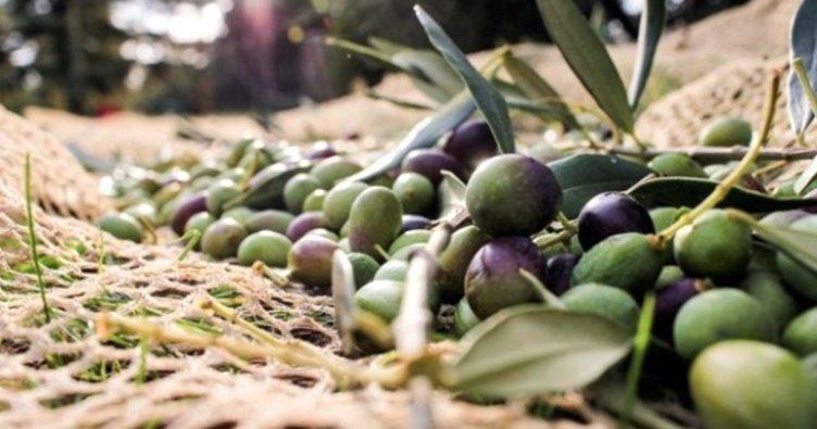Son dakika! Zeytinlik tasarısı ile ilgili flaş gelişme