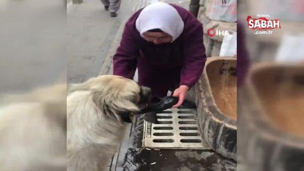 Sivas'ta yaşlı kadın yaptığı bu hareketle sosyal medyada olay oldu | Video