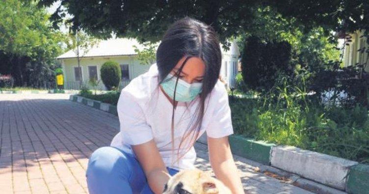 Kulakları kesilen köpek hayata tutundu