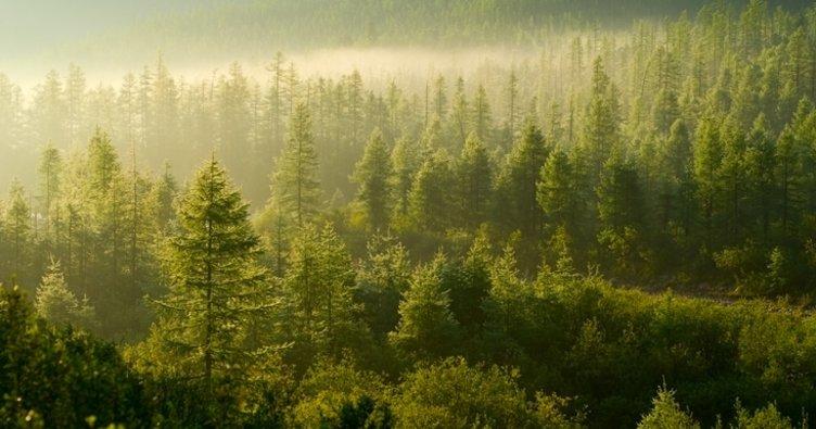 Ormana girmek yasaklandı mı, ormana girişler hangi illerde yasaklandı? İşte yasak olan iller listesi!