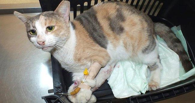Tecavüz edilen kedi kurtarılamadı