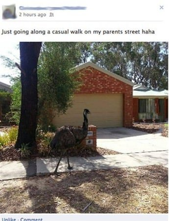 Avustralya'nın ilginç hayvanları