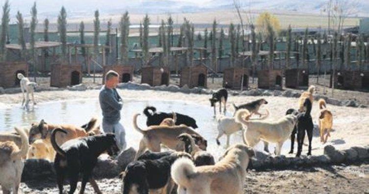 Hayvanseverlerin adresi: Patiliköy