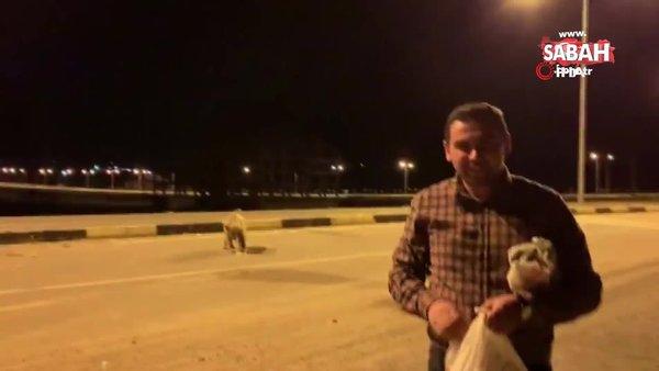 Yavru boz ayıları eliyle böyle besledi | Video
