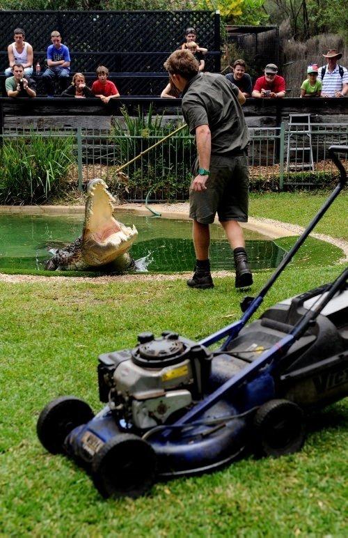 500 kiloluk timsah ve oyuncağı çim biçme makinesi