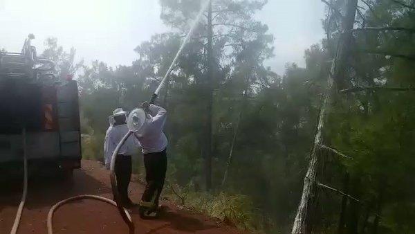 Muğla Marmaris'te arı kovanları taşıyan kamyonet kaza yapınca kızgın arılar etrafa yayıldı | Video
