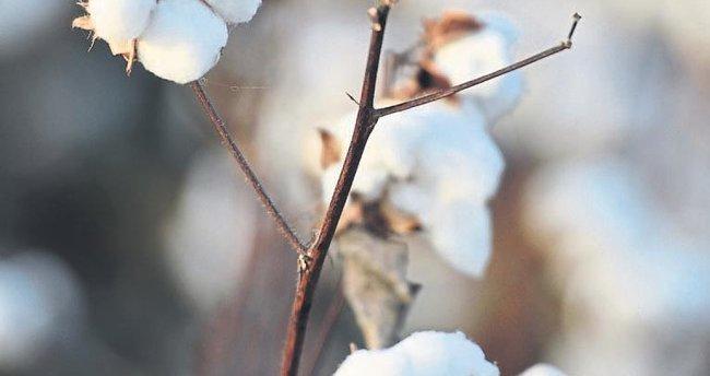 Beyaz altın pamuğa 'havza bazlı' destek