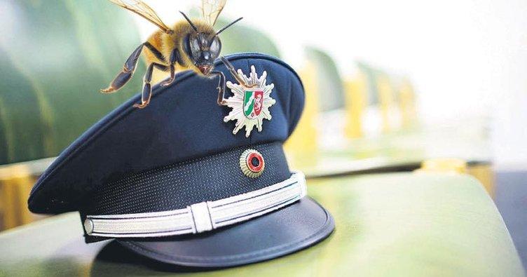 Polis arısıyla operasyon