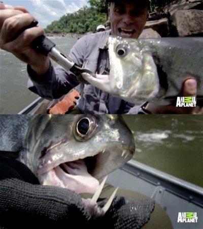 Devasa balıklar