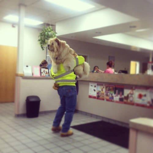 Veteriner korkusu yaşayan 29 masum köpek