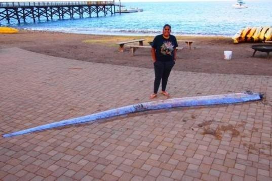 Deprem habercisi sahile vurdu