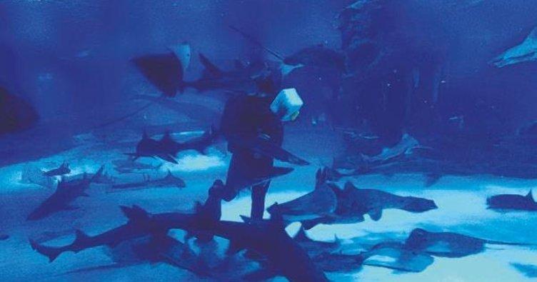 Köpek balıkları ilgi odağı oldu
