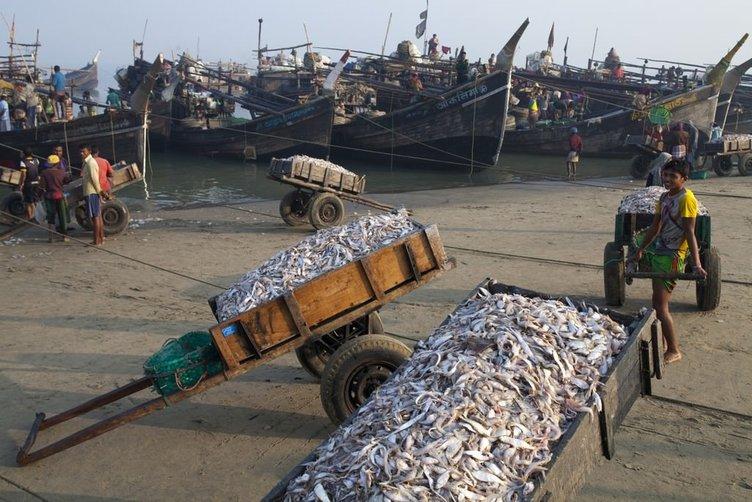 Bangladeş'te kurutulmuş balık köyü