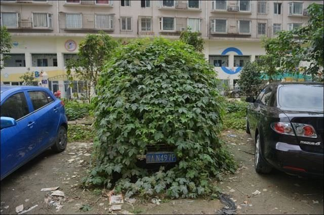 Çin'de zombi araba
