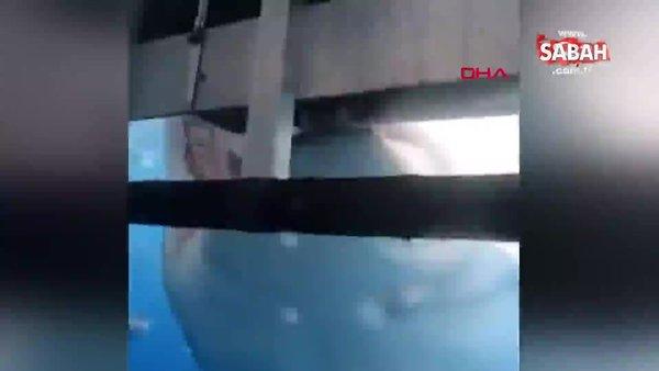 Meksika'da dalış yapan turistlere köpek balığı dehşeti | Video