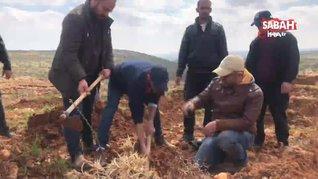 İsrail güçleri, Filistinlilerin zeytin ekmesini engelledi   Video