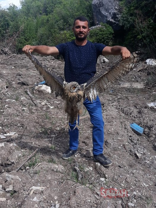 Yaralı bulunan kulaklı orman baykuşu koruma altına alındı
