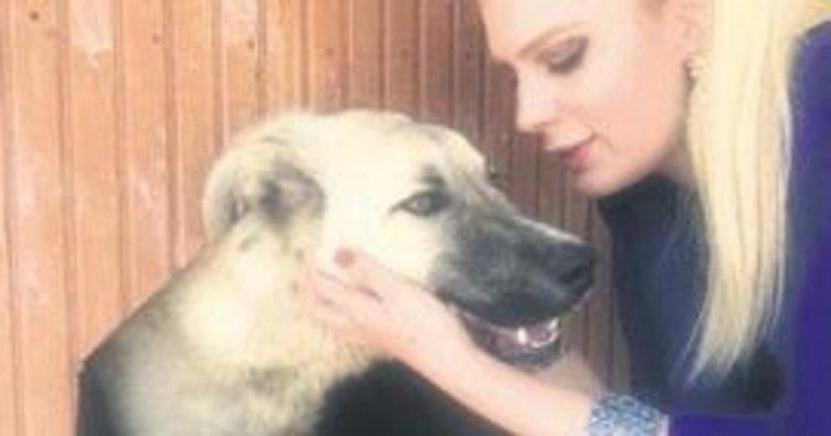 Sürüklenen köpek tedavi edildi