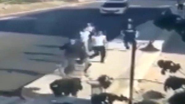 Corona virüsü kısıtlamasına uymayan gençlerin polisi görünce yaşadıkları çılgın panik görüntüleri ortaya çıktı | Video