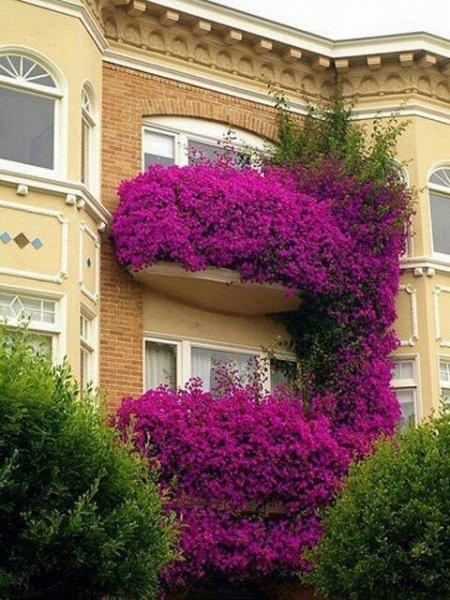 En Güzel Balkon Ve Bahçe çiçekleri Galeri Yaşam 28 Nisan 2019