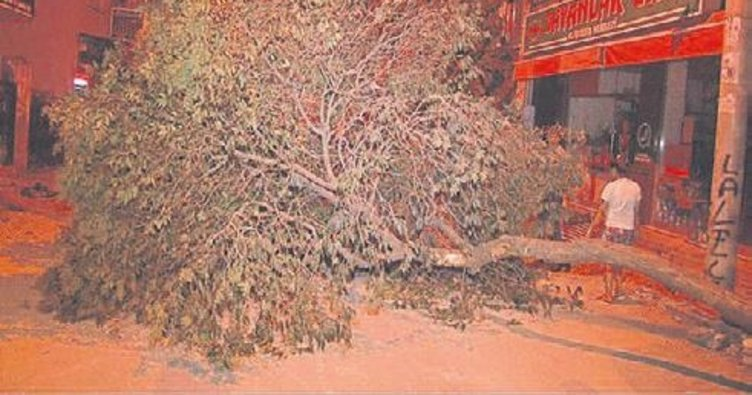 Buca'da zarar gören ağaç yola devrildi