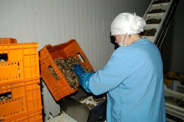 EURO 2016 salyangoz ve kurbağa ihracatını arttırdı
