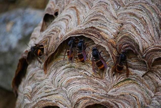 Arılar öyle bir yere yuva yaptılar ki...