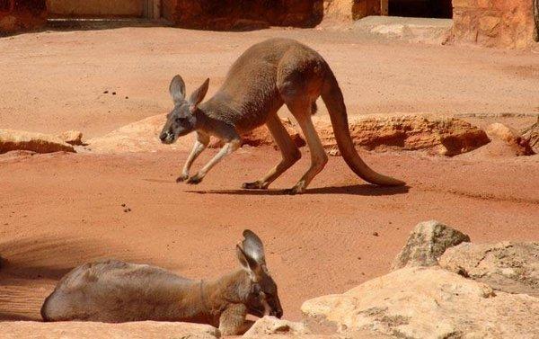 Özel zıplama yetenekleri olan hayvanlar