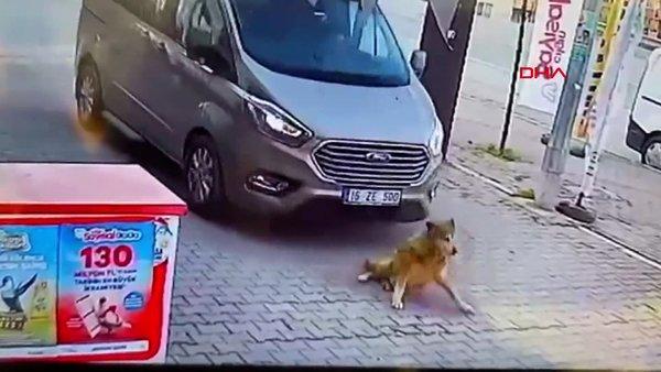 Bursa'da dehşet anları! Yolda yatan köpeği ezerek böyle öldürdü...
