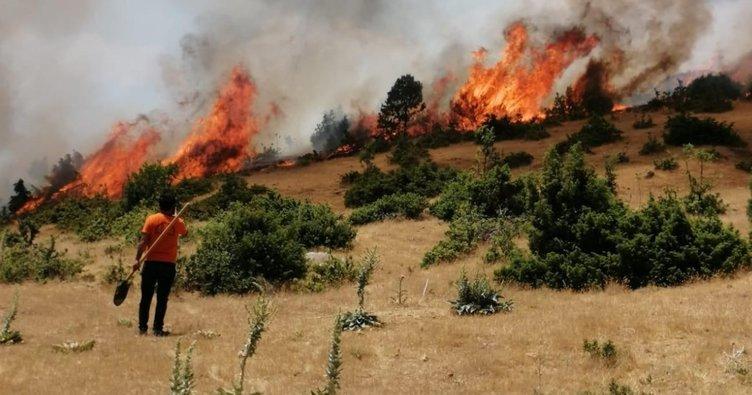 Bingöl'de çıkan orman yangını büyümeden söndürüldü