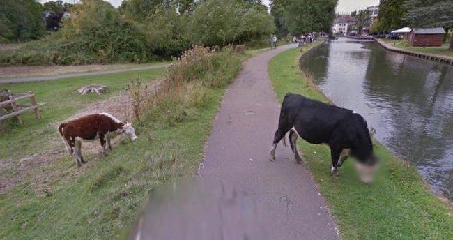 Google, ineklerin özeline saygı duyuyor