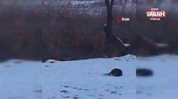Muş'tasu samurlarının kavgası kameraya yansıdı