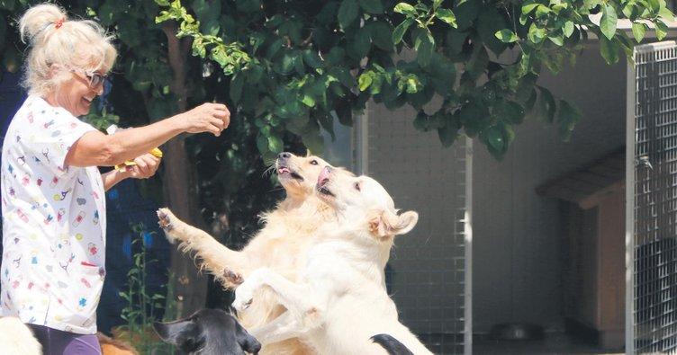 Villasında 85 köpeğe annelik yapıyor
