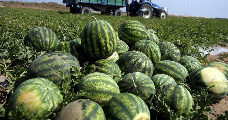 Antalya'da karpuz üretimi 500 bin tona ulaştı