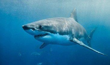Plajda köpek balığının saldırısına uğrayan kişi yaralandı