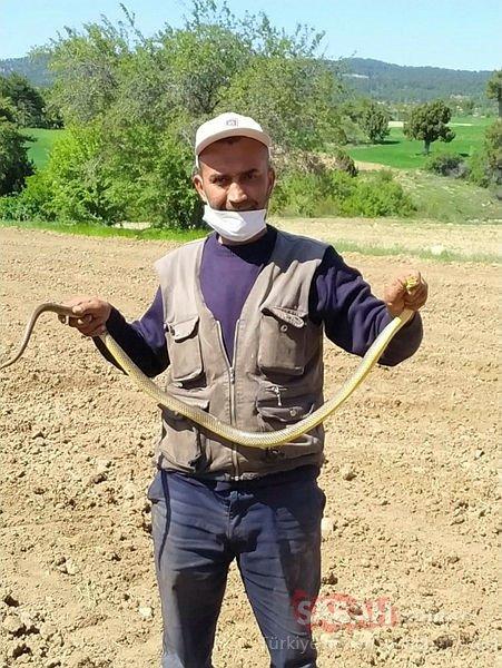 Eliyle yakaladığı 1.5 metre boyundaki yılanla oynadı