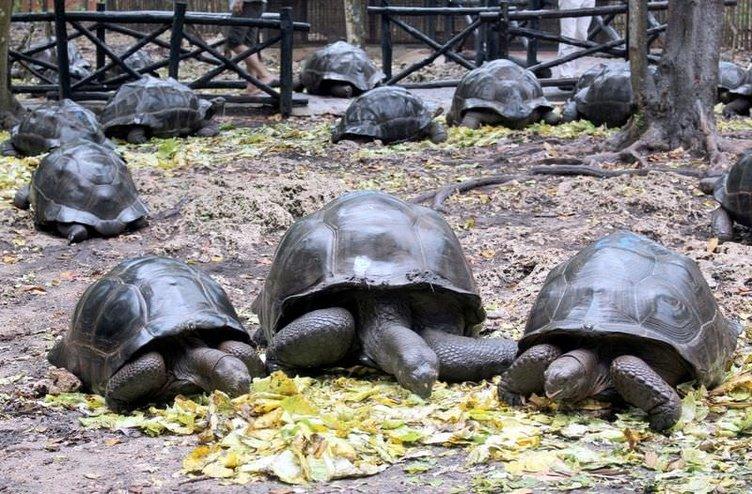 Zanzibar'da kaplumbağalar ülkesi